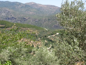 Olive trees near Agios Nikolaus, Greece