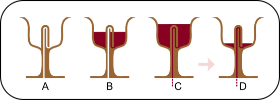 Credit: http://en.wikipedia.org/wiki/Pythagorean_cup